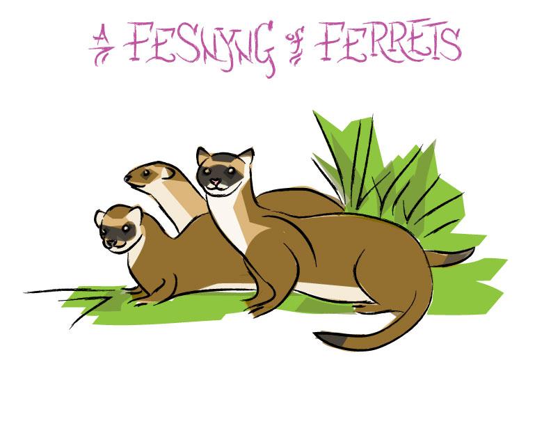 Ian Rogers - a Fesnyng of Ferrets
