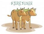 New Artwork – Ian Rogers – a Yoke of Oxen
