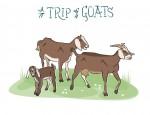 New Artwork – Ian Rogers – a Trip of Goats